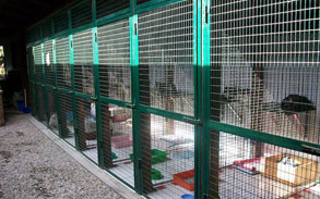 Gallery image - Little Dog Kennels and Cattery